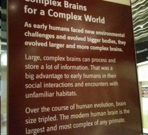 Complex brains